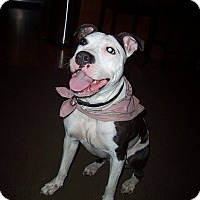 Adopt A Pet :: Dakota - Acushnet, MA