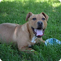 Adopt A Pet :: Queenie in CT - Manchester, CT