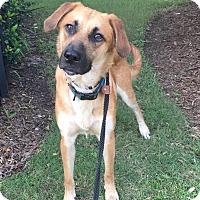 Adopt A Pet :: Nick - Fort Atkinson, WI