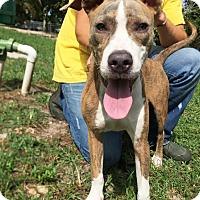 Adopt A Pet :: Loki - Boca Raton, FL