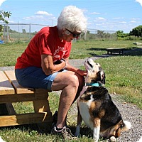 Adopt A Pet :: Missy - Elyria, OH