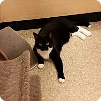 Adopt A Pet :: Jeezy (in CT) - Manchester, CT