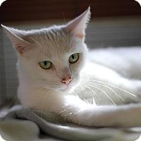Adopt A Pet :: Rose - $10! - Midland, MI