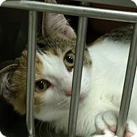 Adopt A Pet :: Freeway - Byron Center, MI