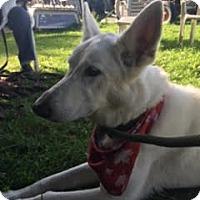 Adopt A Pet :: Brook - Mount Hope, ON