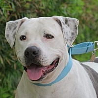 Adopt A Pet :: Shadow (Lover Boy!) - Santa Monica, CA
