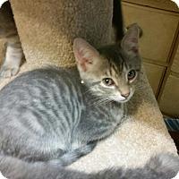 Adopt A Pet :: Umbra - Windermere, FL