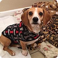 Adopt A Pet :: HONEY - Gustine, CA