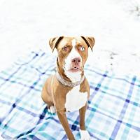 Adopt A Pet :: Neo - Stanton, MI