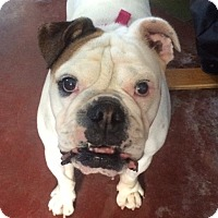 Adopt A Pet :: Tasha - Santa Ana, CA