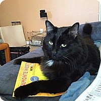 Adopt A Pet :: Duncan - Clermont, FL