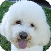Adopt A Pet :: Teddy - La Costa, CA