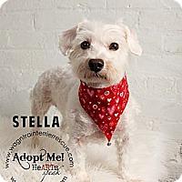 Adopt A Pet :: Stella - Omaha, NE