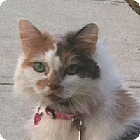 Adopt A Pet :: PRINCESS FIONA - Hamilton, NJ