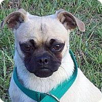 Adopt A Pet :: Lex - Brattleboro, VT