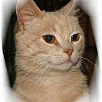 Adopt A Pet :: Hawke - Montgomery, IL