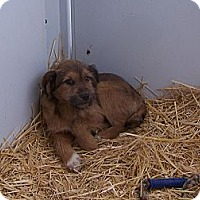 Adopt A Pet :: Birch - Chewelah, WA