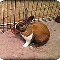 Adopt A Pet :: Johnny - Williston, FL
