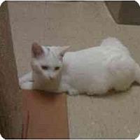 Adopt A Pet :: Chase - Bartlett, TN