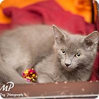 Adopt A Pet :: Vinnie - Fountain Hills, AZ