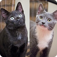 Adopt A Pet :: Piper and Harley - Chicago, IL