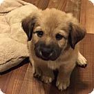 Adopt A Pet :: Baby Tarzan