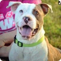 Adopt A Pet :: Thomas - Albemarle, NC