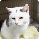 Adopt A Pet :: Davie (was)Daisy Mae* - Henderson, NC