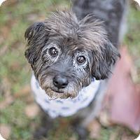 Adopt A Pet :: Gus - Kingwood, TX