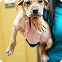 Adopt A Pet :: Orleans - Appleton, WI