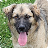 Adopt A Pet :: Roxanne - Harmony, Glocester, RI