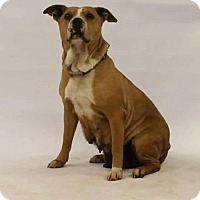 Adopt A Pet :: Dena - Broken Arrow, OK