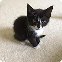 Adopt A Pet :: Lotus - Potomac, MD
