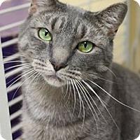 Adopt A Pet :: Robo - Boise, ID