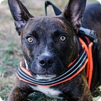 Adopt A Pet :: Veronica - Greenwood, SC