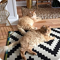 Adopt A Pet :: Chester & Wiley Courtesy Post - Absecon, NJ