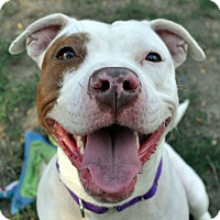 Adopt A Pet :: NYLA - Boston, MA