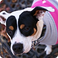 Adopt A Pet :: Annie - Holiday Special! - Allentown, PA