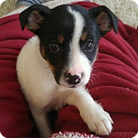 Adopt A Pet :: Frazier-Puppy Love - Union Grove, WI