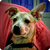 Adopt A Pet :: Mark - Foster, RI