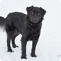 Adopt A Pet :: Samsan - Drumbo, ON