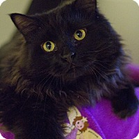 Adopt A Pet :: Blippo - Grayslake, IL