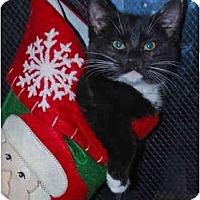 Adopt A Pet :: Ellie Bellie - Colmar, PA