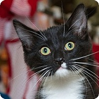 Adopt A Pet :: Chico - Sacramento, CA