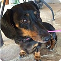 Adopt A Pet :: Minnie - Tucson, AZ
