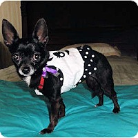 Adopt A Pet :: Pixie - Mooy, AL