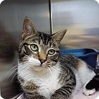 Adopt A Pet :: Miranda Lambert - Richboro, PA