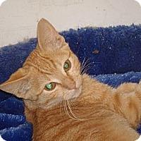 Adopt A Pet :: Goldie - Scottsdale, AZ