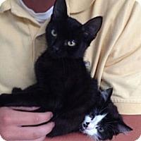 Adopt A Pet :: Maxwell - Reston, VA