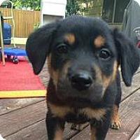 Adopt A Pet :: Marshall - Austin, TX